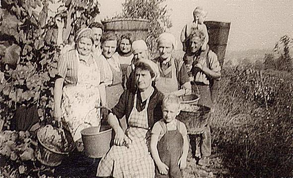Vendanges des anciens - 1962