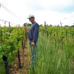 Semis de seigle pour dynamiser les organismes vivants du sol