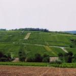Le vignoble en été