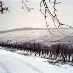 Le vignoble en hiver